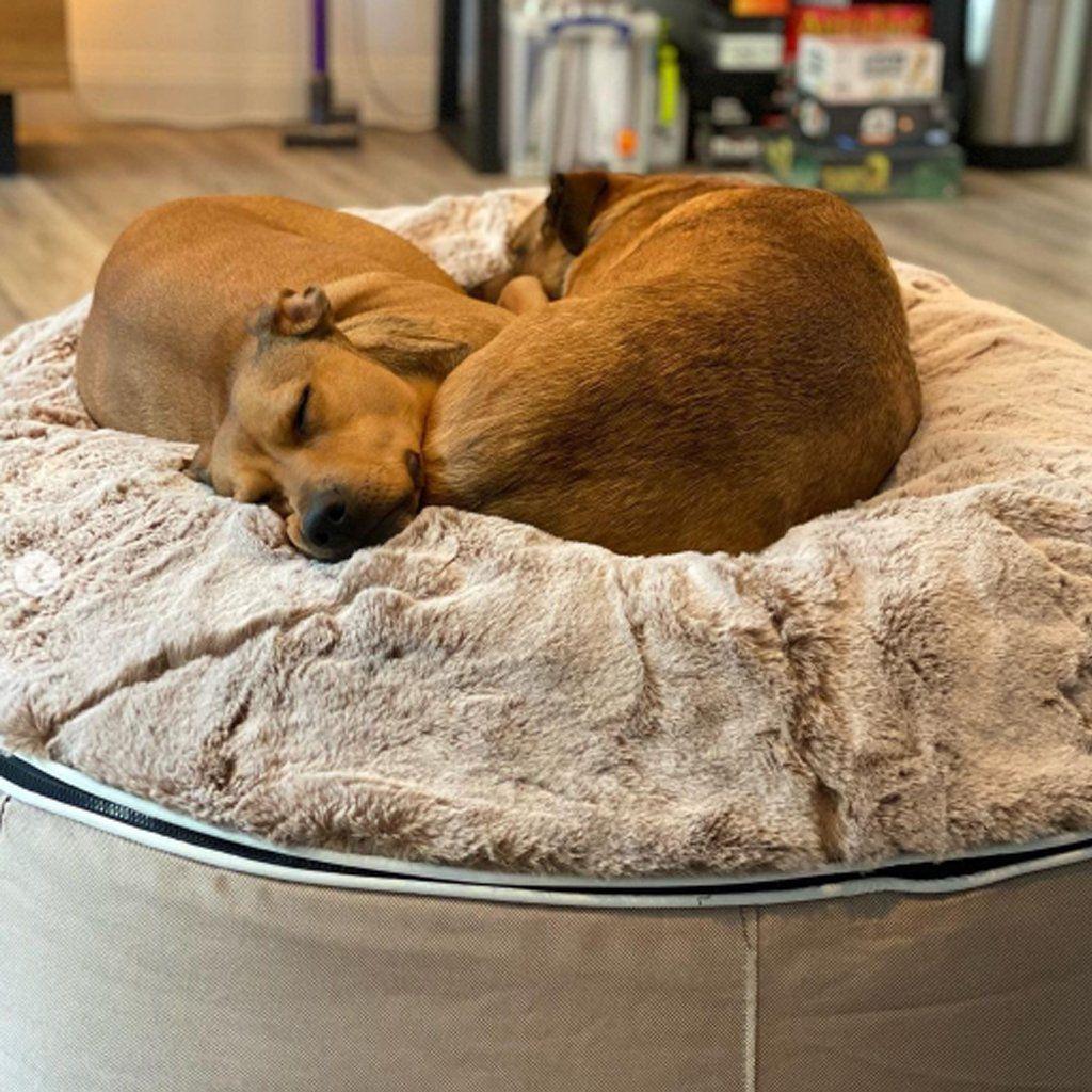 ambient lounge pet bed indooroutdoor cappuccino large