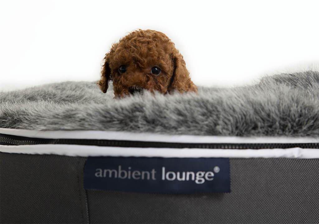 ambient lounge pet bed indooroutdoor small